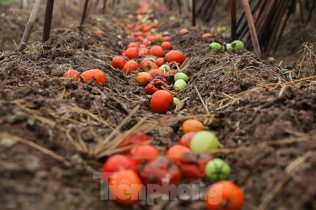 200 tấn rau củ quả ế, người dân Hà Nội đổ ngoài đồng - Ảnh 2.