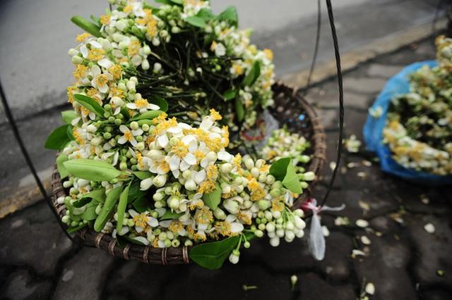 Tháng 3 mùa hoa bưởi: Vừa đẹp, thơm lại vừa làm thuốc chữa bệnh siêu hay - Ảnh 4.