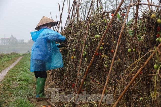 200 tấn rau củ quả ế, người dân Hà Nội đổ ngoài đồng - Ảnh 6.