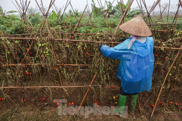 200 tấn rau củ quả ế, người dân Hà Nội đổ ngoài đồng - Ảnh 8.