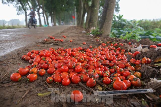 200 tấn rau củ quả ế, người dân Hà Nội đổ ngoài đồng - Ảnh 9.