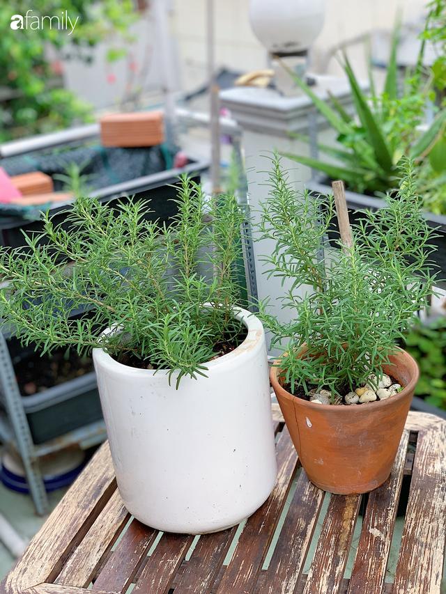9 loại cây cảnh có tác dụng đuổi muỗi trồng trong nhà tốt nhất - Ảnh 1.