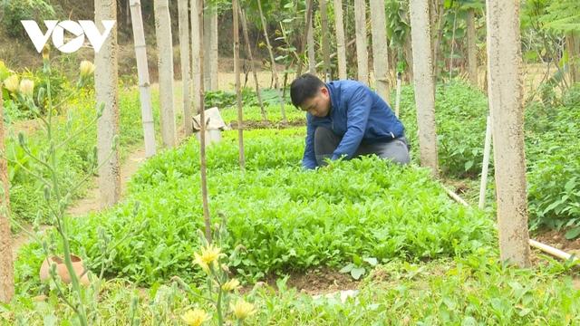 Thanh niên Bắc Kạn trồng rau, trồng nấm...thu hàng trăm triệu đồng mỗi năm - Ảnh 1.
