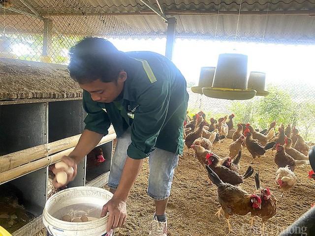 Nghệ An: Giá trứng gia cầm liên tục chạm đáy, người chăn nuôi điêu đứng - Ảnh 2.
