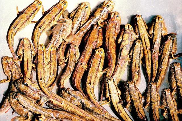"""Việt Nam có 5 loại cá được xem là đặc sản nức tiếng, nhìn thì """"sợ bỏ chạy"""" nhưng ăn rồi mới thấy cực ngon! - Ảnh 14."""