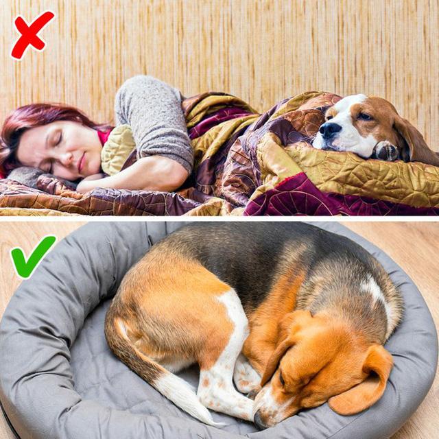 Nếu khổ vì thức giấc nửa đêm, mất ngủ: 7 cách tự nhiên và khoa học rất hiệu quả sẽ cứu bạn - Ảnh 3.