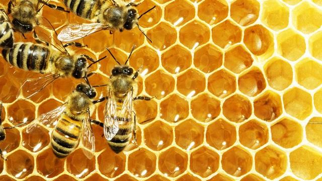 Giáo sư dinh dưỡng đính chính 8 hiểu lầm khi dùng mật ong: Hóa ra hầu hết mọi người đều có thể sai - Ảnh 5.