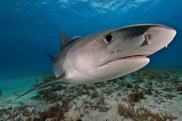 Tỷ lệ bị rắn độc, cá mập và gấu dữ tấn công là 1/893,35 triệu tỷ, vậy mà chàng trai này lại trúng cả combo mà vẫn sống nhăn răng! - Ảnh 2.