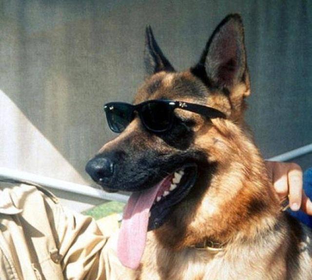 Gia tộc chó giàu nhất hành tinh: Tài sản 400 triệu USD, sở hữu tập đoàn riêng, biệt thự 7000 mét vuông chạy mỏi chân - Ảnh 5.