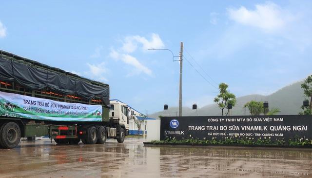 Vinamilk nhập khẩu hơn 2.100 con bò sữ HF thuần chủng từ mỹ về trang trại mới ở Quảng Ngãi - Ảnh 1.