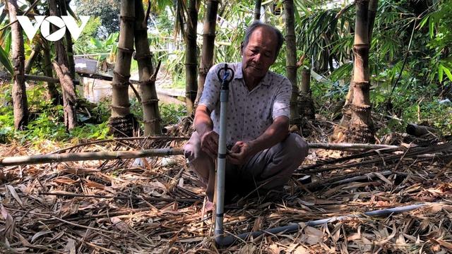Làm giàu từ trồng măng tre trên đất mặn ở Cà Mau - Ảnh 1.