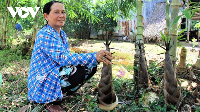 Làm giàu từ trồng măng tre trên đất mặn ở Cà Mau - Ảnh 2.