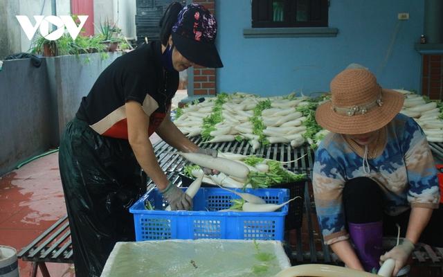 Giá quá rẻ, nông dân Hà Nội vứt bỏ củ cải, cà chua...đầy đồng vì ế ẩm - Ảnh 11.