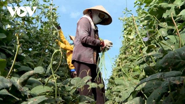 Phân bón tăng giá doanh nghiệp lẫn nôngdâncùng gặp khó  - Ảnh 2.