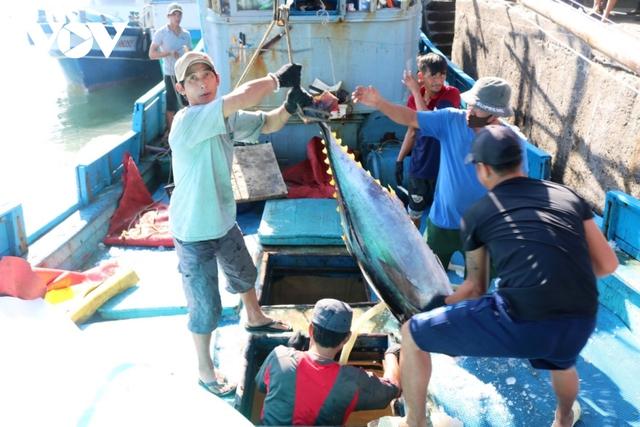 Sản lượng cá ngừ đại dương sụt giảm - Ảnh 3.