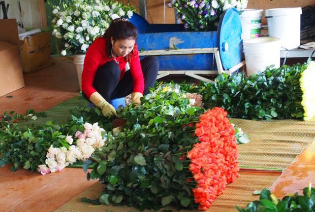Giá hoa hồng Đà Lạt tăng vọt dịp 8/3 - Ảnh 3.