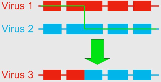 Điều gì sẽ xảy ra khi một người nhiễm tới 2 biến thể COVID-19? - Ảnh 2.
