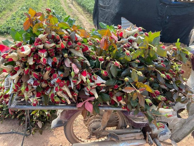 Hoa hồng tăng giá vùn vụt, nghề giao hàng kiếm bộn tiền dịp 8/3 - Ảnh 1.