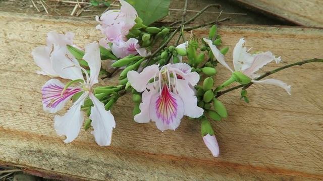 Hoa ban nở bạt ngàn ở Thủ đô: Hóa ra loại hoa này còn có thể làm thuốc chữa bệnh cực hay! - Ảnh 3.