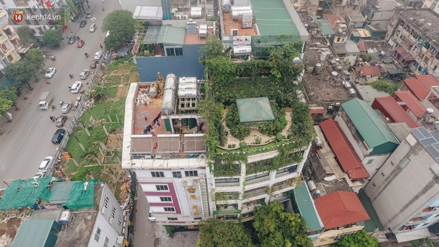 Flycam khu rừng trên sân thượng của người phụ nữ Hà Nội: Rộng 200m2, 1.500 hoa loa kèn bao phủ - Ảnh 1.