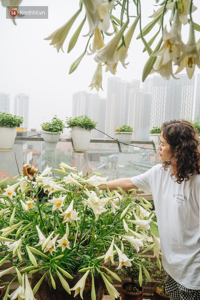 Forest drone on the terrace of the Hanoi woman: 200m2 wide, 1,500 lilies covered - Photo 21.