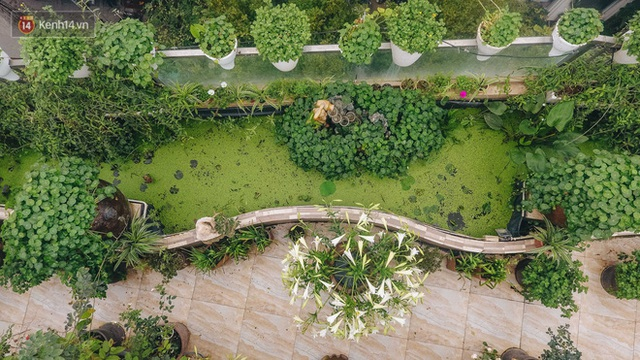 Forest drone on the terrace of the Hanoi woman: 200m2 wide, 1,500 lilies covered - Photo 4.