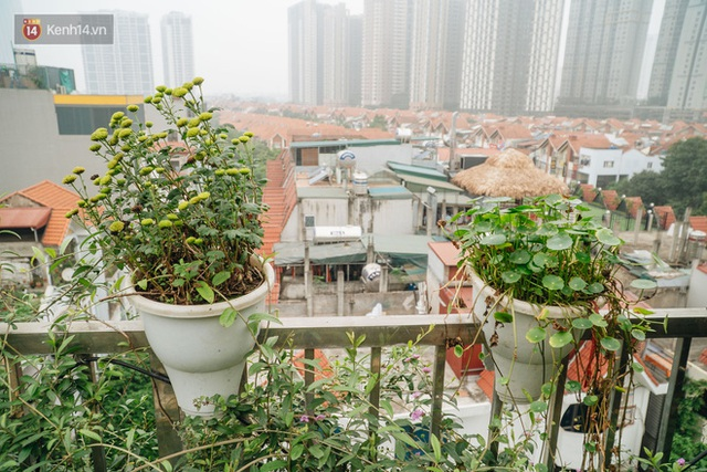 Forest drone on the terrace of the Hanoi woman: 200m2 wide, 1,500 lilies covered - Photo 34.