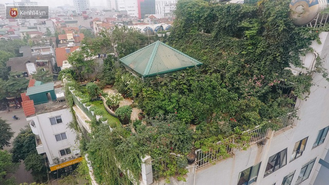 Forest drone on the terrace of the Hanoi woman: 200m2 wide, 1,500 lilies covered - Photo 5.