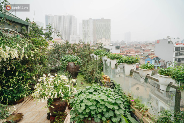 Forest drone on the terrace of the Hanoi woman: 200m2 wide, 1,500 lilies covered - Photo 10.