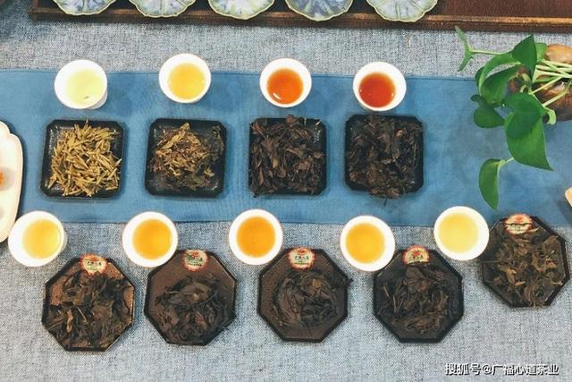 Sau 3000 năm được người đời coi là đồ uống số 1, trà xanh tiếp tục được GS dinh dưỡng ca tụng nhờ tác dụng này - Ảnh 3.