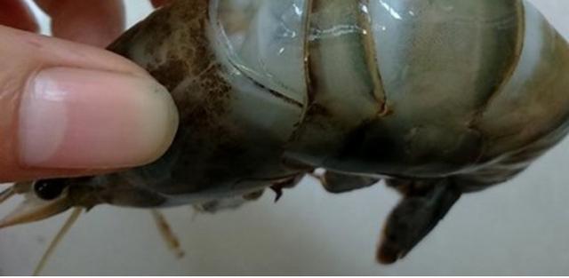 Chuyên gia Nguyễn Duy Thịnh: 10kg tôm có thể bị bơm tới 2kg tạp chất, cách để nhận biết tôm bẩn - Ảnh 6.