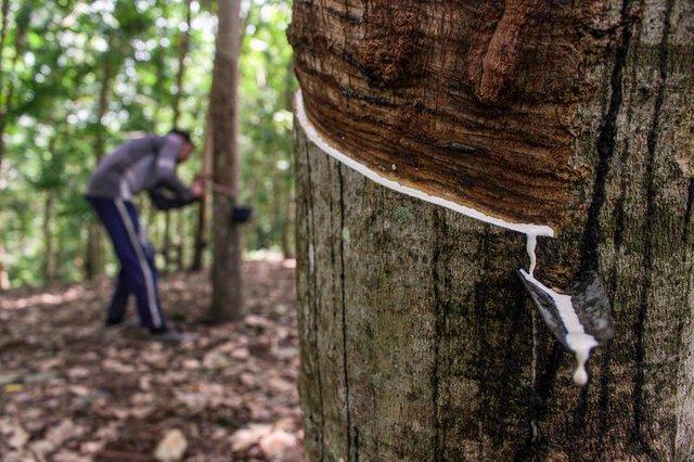 Bloomberg: Sau giấy vệ sinh, chip... đến lượt nguyên liệu mà Việt Nam là nước hiếm hoi có thể sản xuất thiếu hụt! - Ảnh 1.