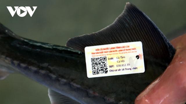 Cá nước lạnh Lào Cai được gắn tem truy xuất nguồn gốc - Ảnh 1.