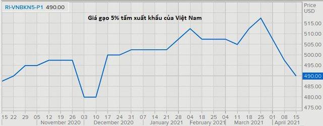 Giá gạo xuất khẩu của cả Việt Nam và Ấn Độ đều lao dốc xuống thấp nhất nhiều tháng - Ảnh 1.