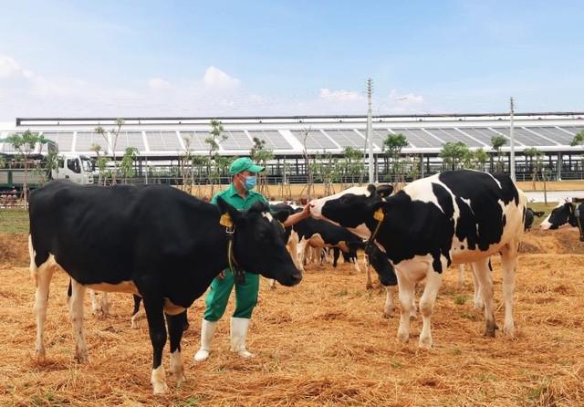 Vinamilk liên tiếp thăng hạng trong Top 50 công ty sữa hàng đầu thế giới - Ảnh 5.