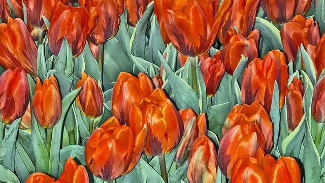 Sốt lan đột biến, giấc mộng ôm lan đổi đời và lời cảnh báo bong bóng tulip gần 400 năm trước - Ảnh 4.