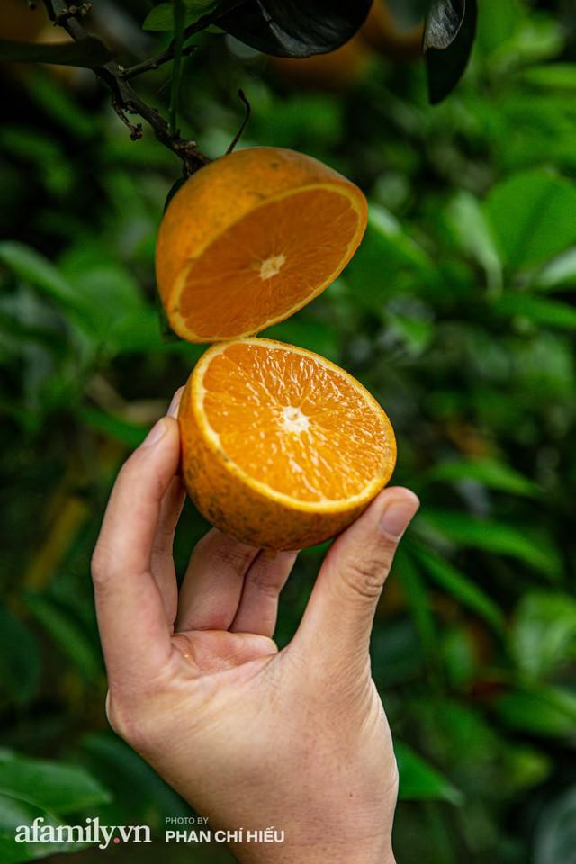 Chàng công tử đất Hà thành bỏ phố lên núi làm chủ 3 quả đồi trồng cam, mỗi năm kiếm cả tỷ bỏ túi nhưng cũng bị vùi dập đến tơi bời - Ảnh 6.