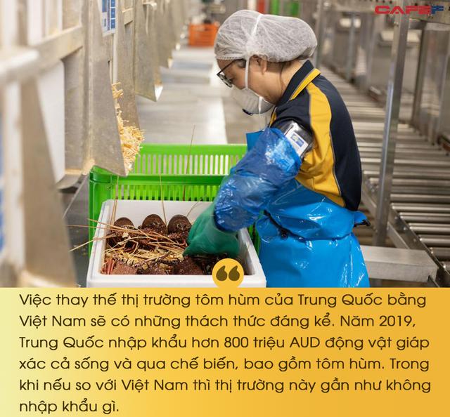 Căng thẳng Australia với Trung Quốc leo thang, chuyên gia nói gì về cơ hội giao thương mới của Việt Nam? - Ảnh 2.