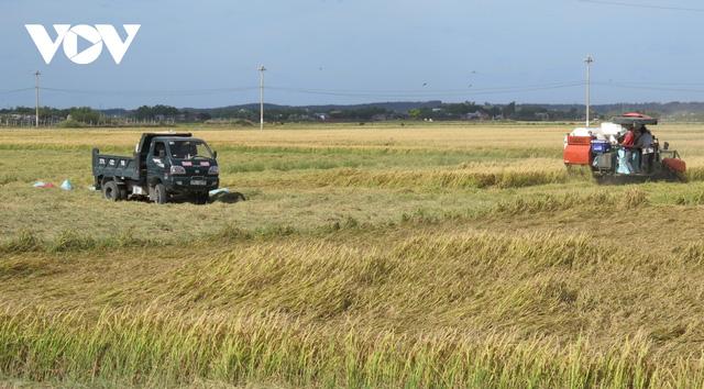 Vụ lúa Đông Xuân được mùa, được giá, nông dân Bình Định phấn khởi - Ảnh 1.