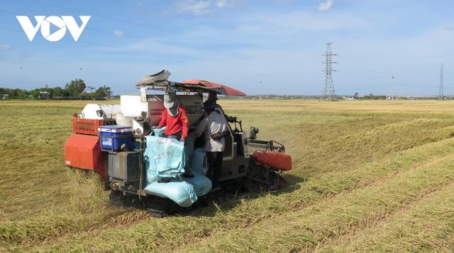 Vụ lúa Đông Xuân được mùa, được giá, nông dân Bình Định phấn khởi - Ảnh 2.