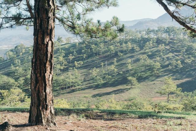 Các gia đình Hà Nội, Sài Gòn muốn đi camping trong phạm vi 300km thì đừng bỏ lỡ loạt địa điểm từ núi tới biển quá đẹp này, sẵn sàng cho kỳ nghỉ 30/4, 1/5 thật chill thôi nào! - Ảnh 34.