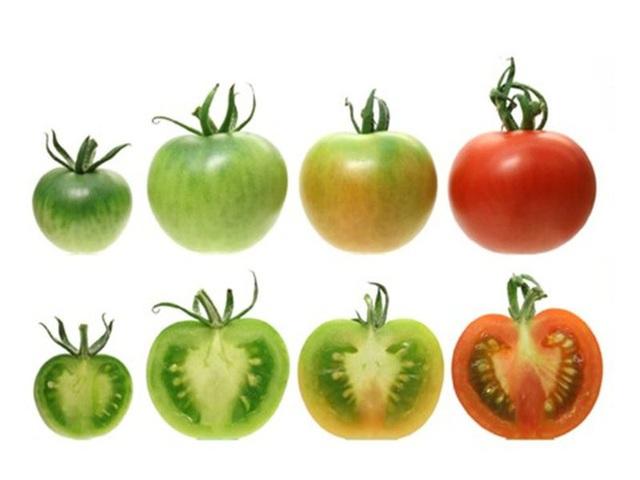 Bác sĩ nhắc nhở: 4 loại rau được mệnh danh là vũ khí hại gan khuyên mọi người ăn càng ít càng tốt - Ảnh 3.