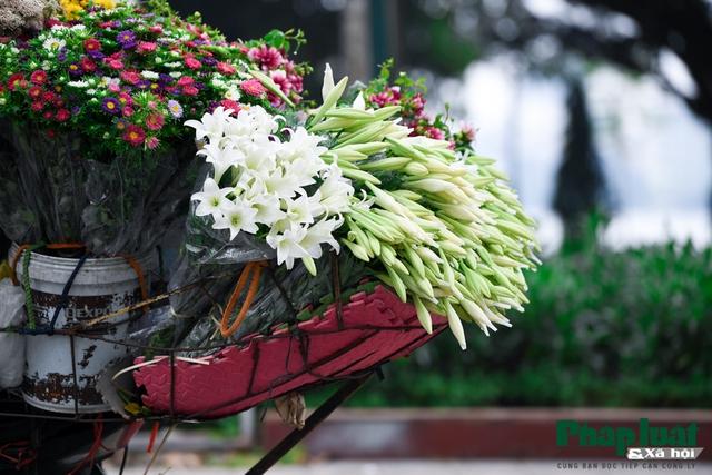 Hà Nội mùa hoa loa kèn về trên phố - Ảnh 13.