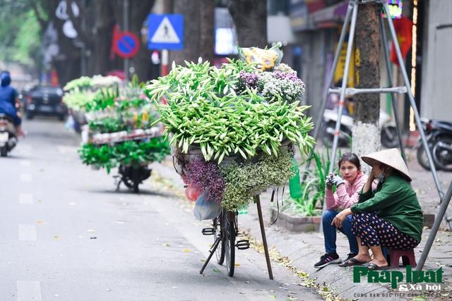 Hà Nội mùa hoa loa kèn về trên phố - Ảnh 8.