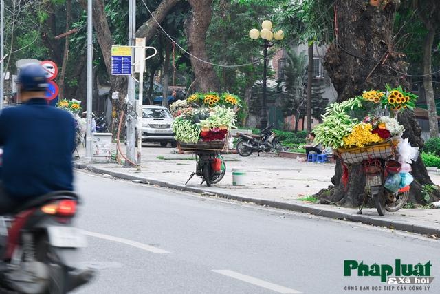 Hà Nội mùa hoa loa kèn về trên phố - Ảnh 9.