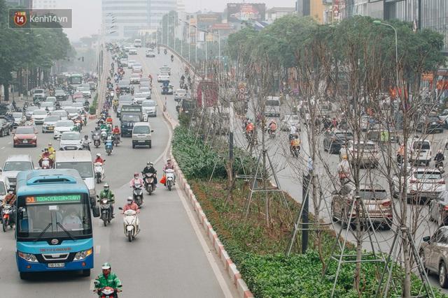 Hàng phong lá đỏ ở Hà Nội: Từ kỳ vọng Châu Âu giữa lòng Thủ đô đến những cành củi khô sắp bị thay thế - Ảnh 2.