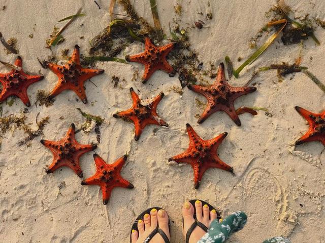Từ vụ sao biển chết khô ở Phú Quốc: Dân mạng tiếp tục đào thêm hàng loạt hình sống ảo đầy tội lỗi của du khách - Ảnh 17.