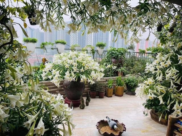 Hoa loa kèn vào mùa giá siêu rẻ, mãn nhãn khu vườn nghìn bông đua nở - Ảnh 3.