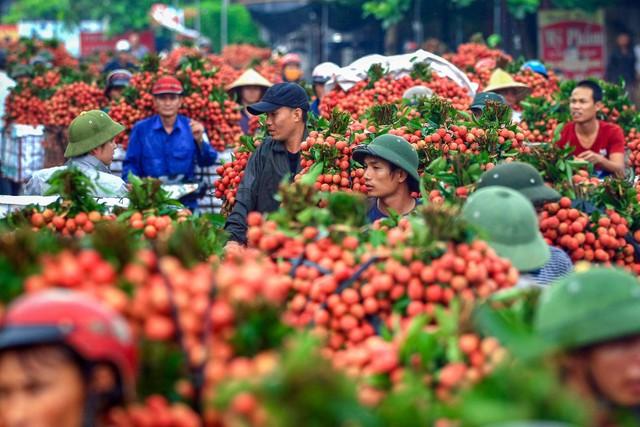 Hải Dương bán nông sản trên chợ online Alibaba, Lazada, Sendo - Ảnh 1.