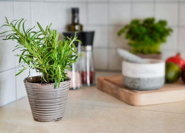 8 loại cây cảnh nên trồng trong nhà bếp vì có khả năng lọc không khí và khử mùi cực tốt - Ảnh 1.